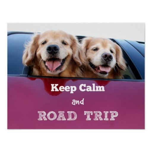Golden Retriever Keep Calm and Road Trip Poster by #AugieDoggyStore