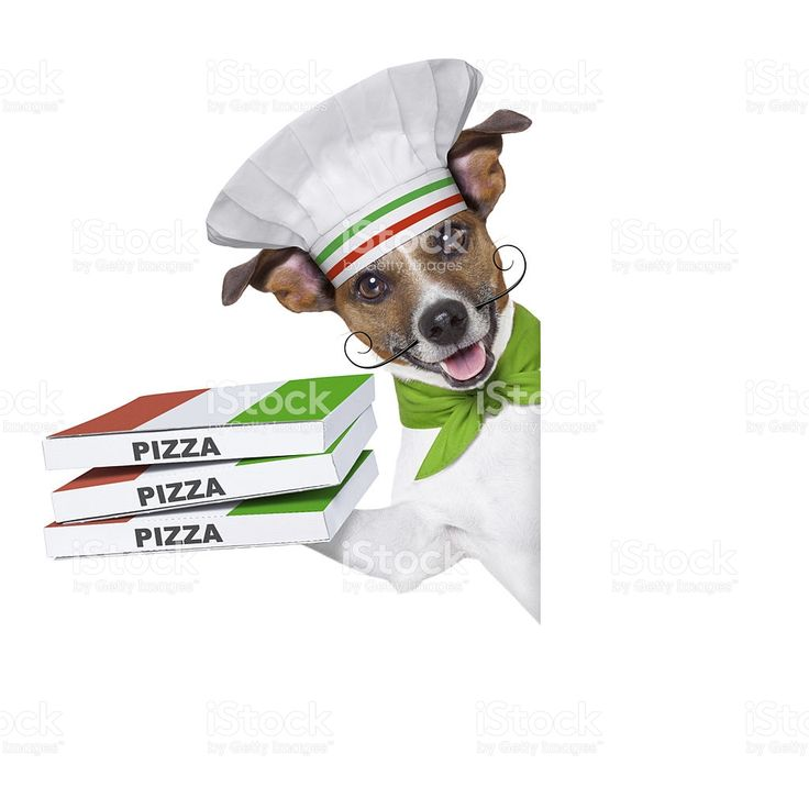 Consegna pizza cane foto stock royalty-free
