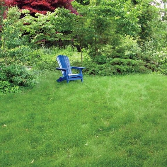 The No Fuss Lawn