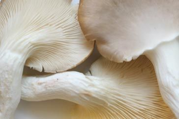 Oyster Mushrooms, named for their resemblance to oysters, are a good source of niacin, thiamine and riboflavin, and also supply folate and dietary fibre.