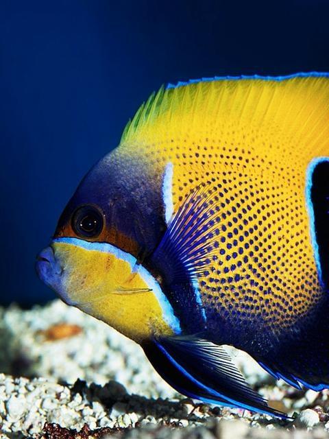Colorful Saltwater Aquarium Fish