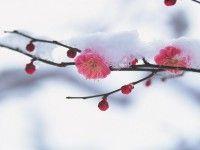 schöne schnee bilder