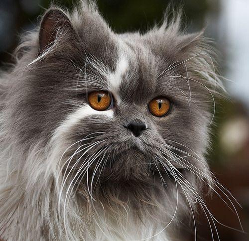 Amazing markings. Gorgeous cat!