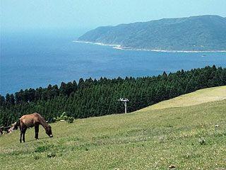 都井岬-SPinfo 野生馬、北限ソテツ、絶景の灯台 宮崎県串間市