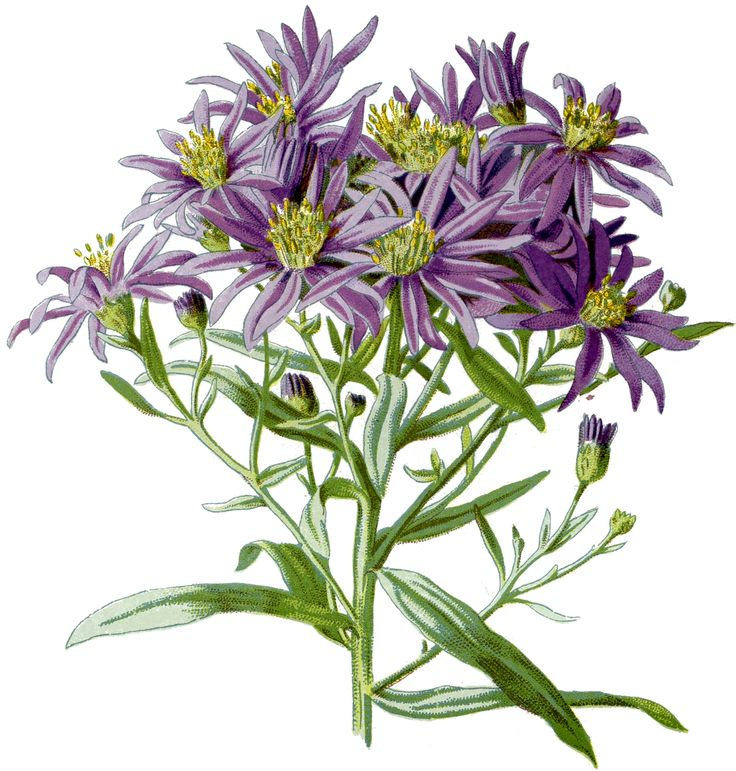best  purple flower pictures ideas on   bubble, Beautiful flower