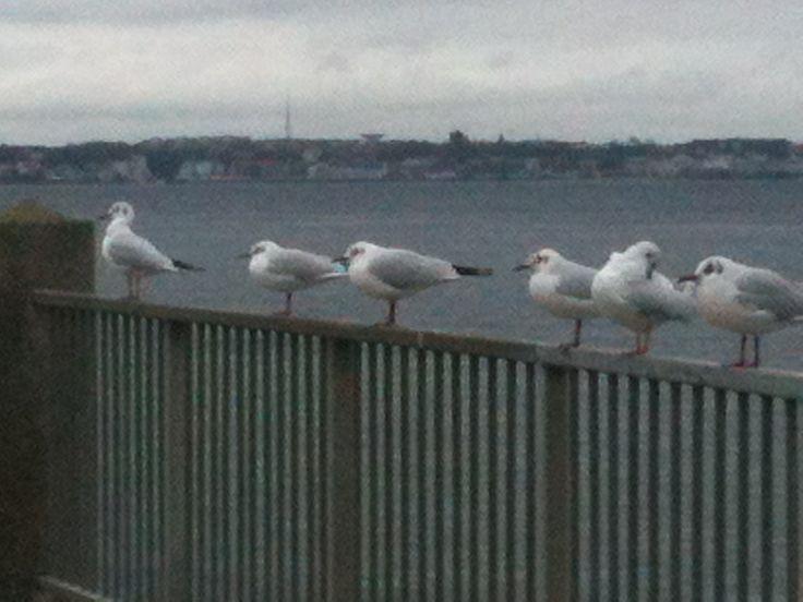 Gad vide hvad de 'taler' om, når de sidder her morgen efter morgen?