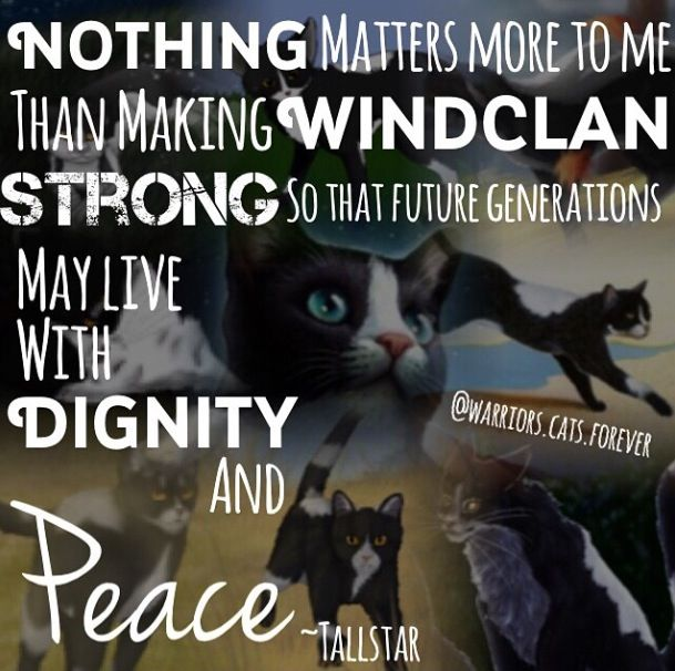 """Warriors Erin Hunter Author Of: """"Nothing Matters More To Me Than Making WindClan Strong So"""