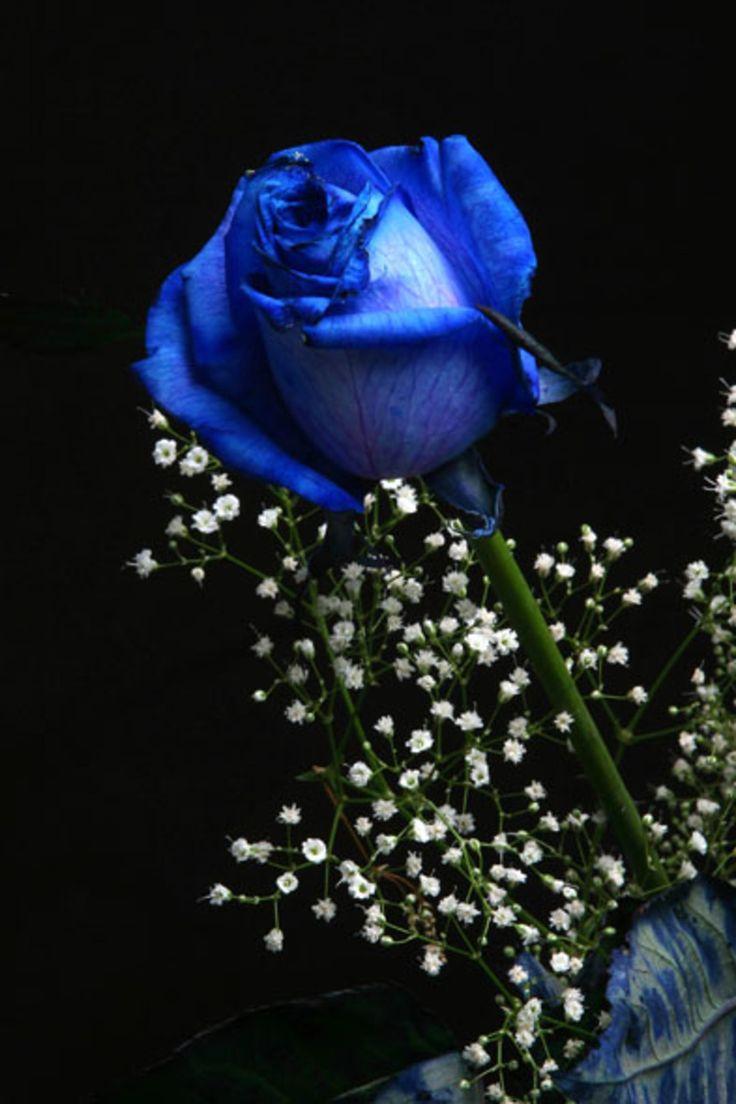 Красивый букет синих роз гиф