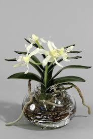 Resultado de imagem para выращивание орхидеи в вазе в воде