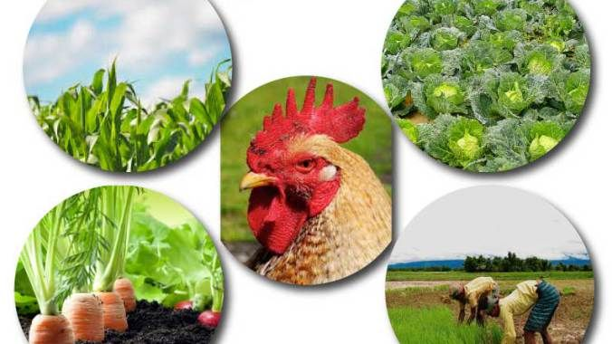 Agriculture is the main base of our daily life. Agriculture Definition, Importance and Branches of Agriculture are described on this post....