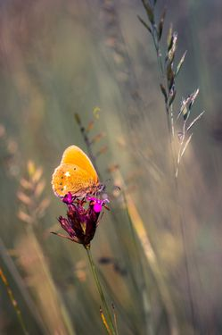 Orange butterfly in the rising sun