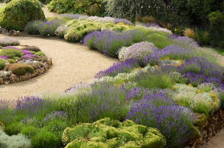 beautiful border. dry garden