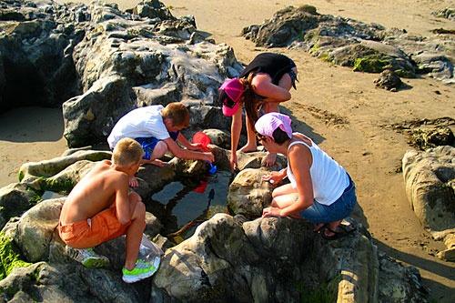 Carpinteria beach tide pools, California, USA