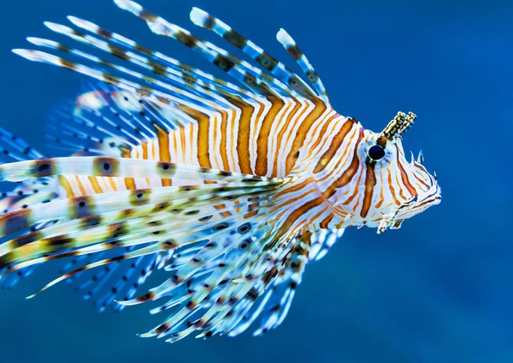 Saltwater aquarium & reef salinity and specific gravity review and charts.