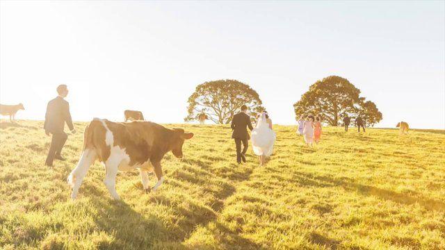 sunshine coast wedding film