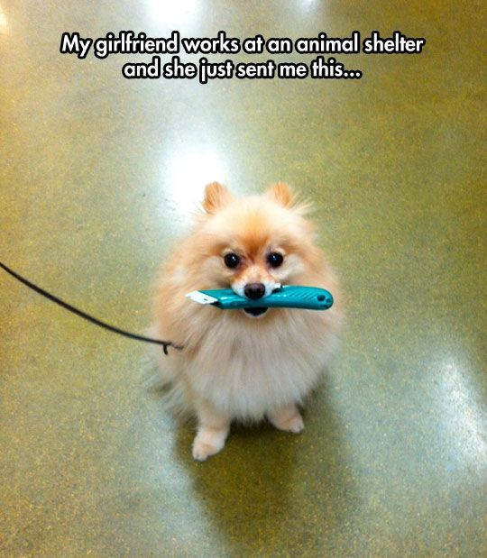 A Funny Dog Cute Pinterest Dog Animal And Funny Animal