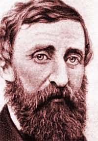 Henry david thoreau the natural history essays for sale