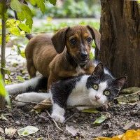 #dogalize Le malattie respiratorie cane e gatto: quali sono? #dogs #cats #pets