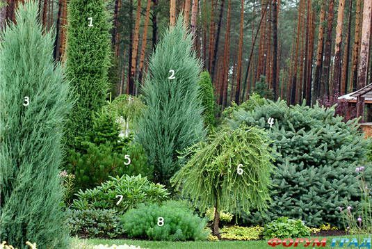 1. Juniperus communis 'Stricta' 2. Juniperus scopulorum 'Skyrocket' 3. Juniperus scopulorum 'Blue Arrow' 4. Picea asperata (Compacta) 5. Pinus mugo 6. Larix decidua 'Pendula' 7. Rhododendron 8. Euphorbia cyparissias