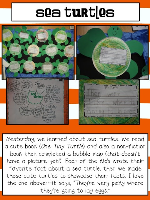 Sea Turtle Activity and craft