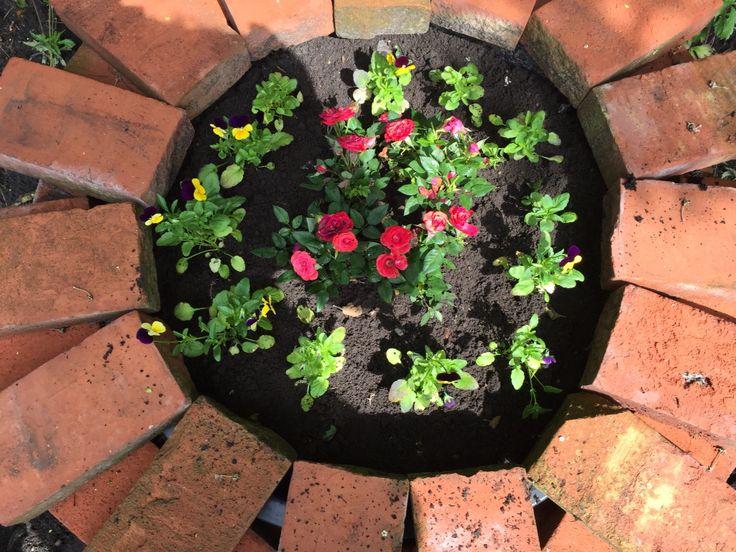 Mini roser og violer