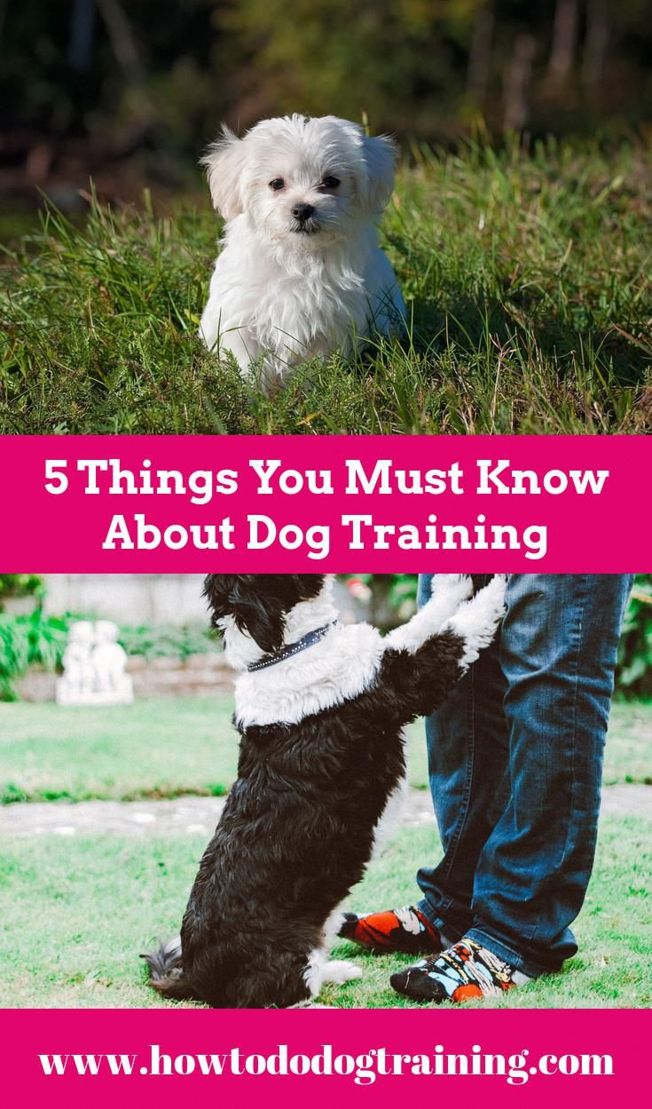 Need Support With Puppy Training Look At These Tips When Training