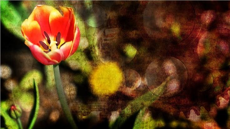 JóKépességek: Nyári dekoráció  http://photokatakomba.blogspot.hu/