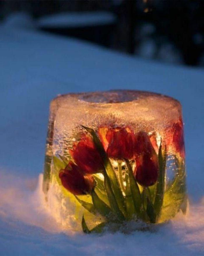 Eislaterne mit gefrorenen Tulpen und flammenlosen Kerzen