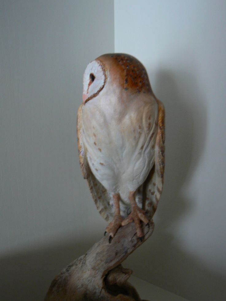 Images about bird carvings on pinterest wood