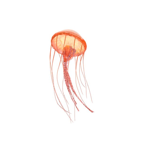 Jellyfish Png Images Psds For Download Pixelsquid S11108041c Jellyfish Png Png Images