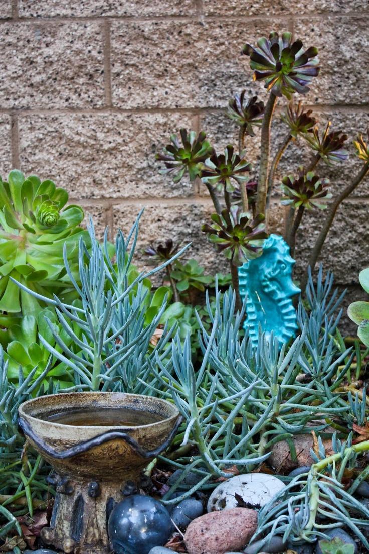 58 best Seascapes of Succulents images on Pinterest | Succulents ...