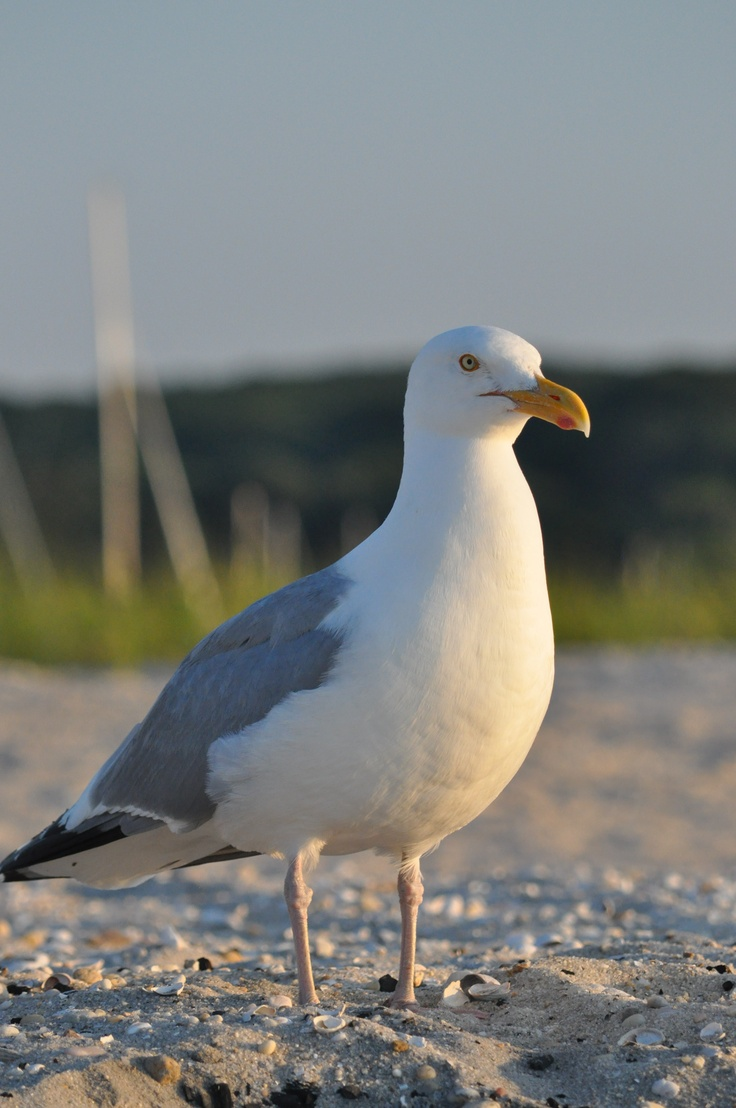 just another seagull in the bird of life.