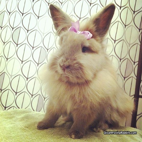 No, I wanted a bow with arrows.   Human-piercing arrows. -DisapprovingRabbits.com