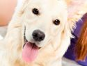 Best Ways to Remove Pet Hair
