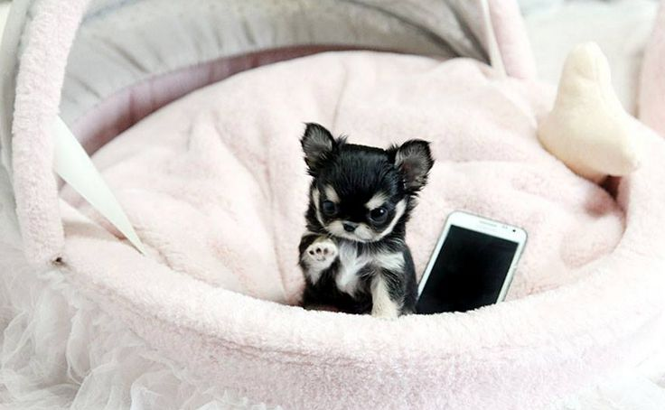 chihuahua asian personals 100% free online dating for chihuahua singles at mingle2com our free  personal ads are full of single women and men in chihuahua looking for serious .