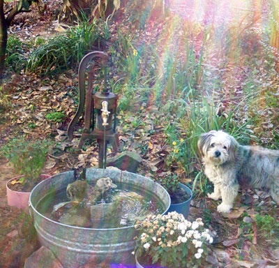 Water Feature Old Pump And Washtub As Frosty 39 S Drinking
