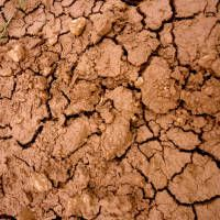 Need to know how to amend clay soil?Don't let tough clay soil get you down. Amending clay soil is easy. This Homesteader's Guide will show you everything you need to know about clay soil, plants for clay soil, and how to amend clay soil.    How to Amend Clay Soil What is Clay