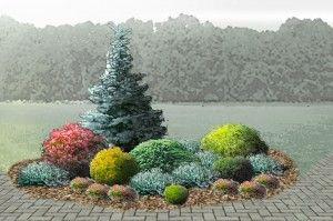 Dygioji eglė (Picea pungens) `Koster,` raudonas – Berberis Thunbergi `Atropurpurea`,  šalia  gelt kupstas – tuja (Thuja occidentalis) `Rheingold`. Tarp tujos ir eglės kadagys (Juniper sabina) `Tamariscifolia`, šalia gelsvas kupstas puskiparisis (Chamaecyparis pisifera) `Filifera Aurea`. Prieš puskip. pušis (Pinus mugo) `Mops`, tuja `Danica`.Pilkšvi kilimėliai gulčiasis kadagys (Juniperus horizontalis) `Blue Chip`, o raudonai žydintys krūmeliai – sidabrakrūmiai (Potentilla fruticosa) `Red…