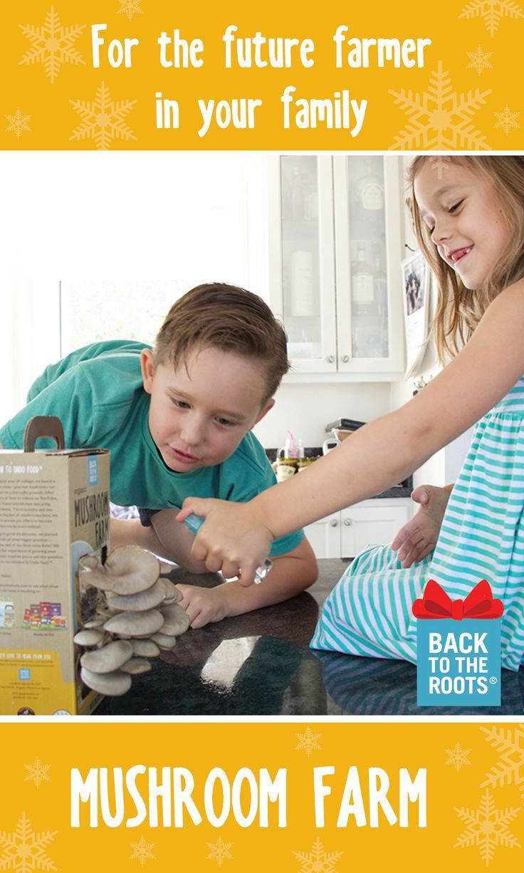 Kids love growing their own food at home. Gift the Mushroom Farm this holiday for your future farmer and grow your own gourmet oyster mushrooms with your family! Just plant, water, and grow. Learn more at http://backtotheroots.com/products/mushroomfarm