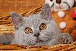Katzennamen