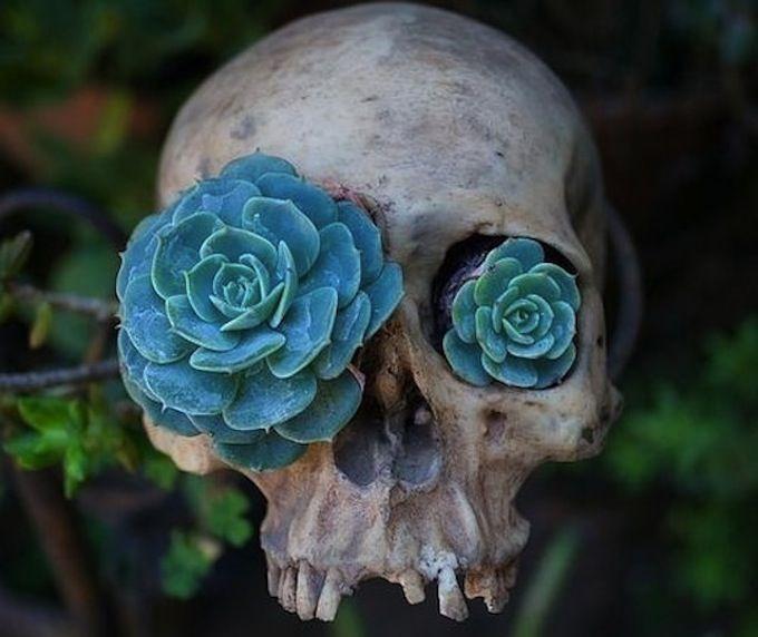 Succulents in skull