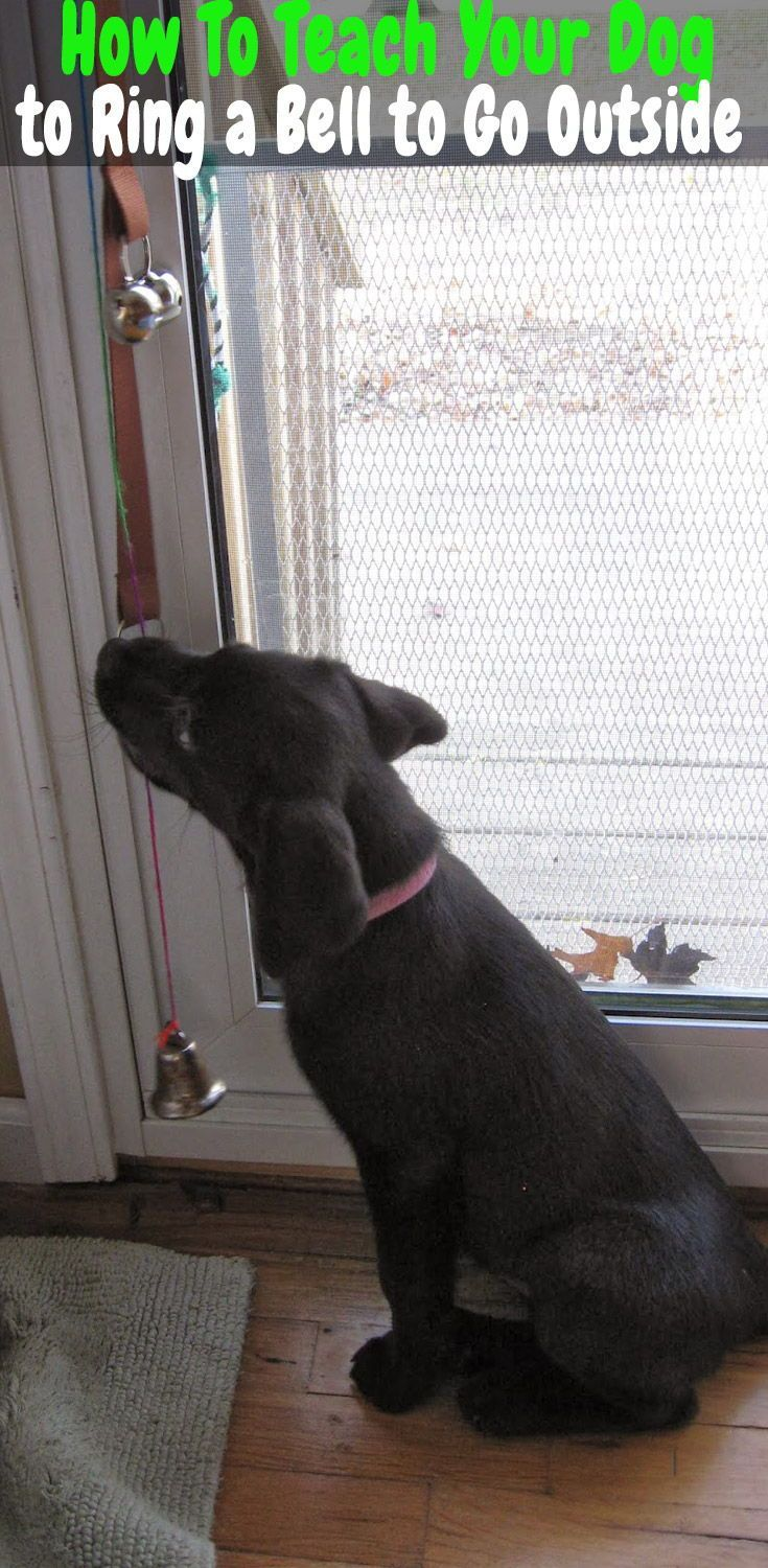 Dog Bell Training Teach A Dog To Ring Bell To Go Outside In 2020 Dog Bell Training Dog Bell Dog Training Obedience