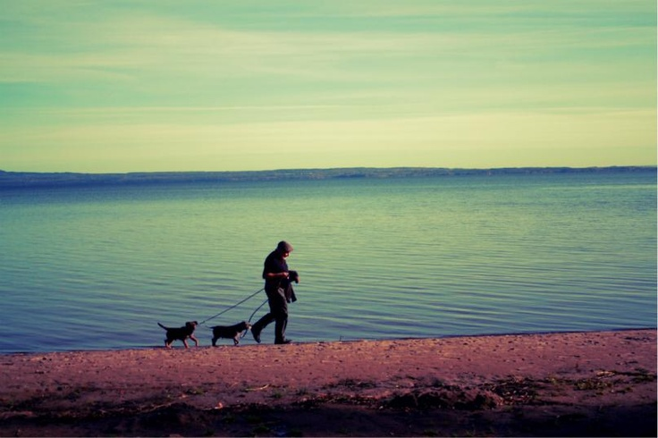 Walking the dogs by lake Vänern (Swedens largest lake)  Photo: Carin Österdahl