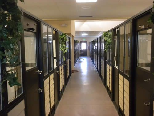 Luxury Dog Kennels Humane Shelters And Boarding Kennel