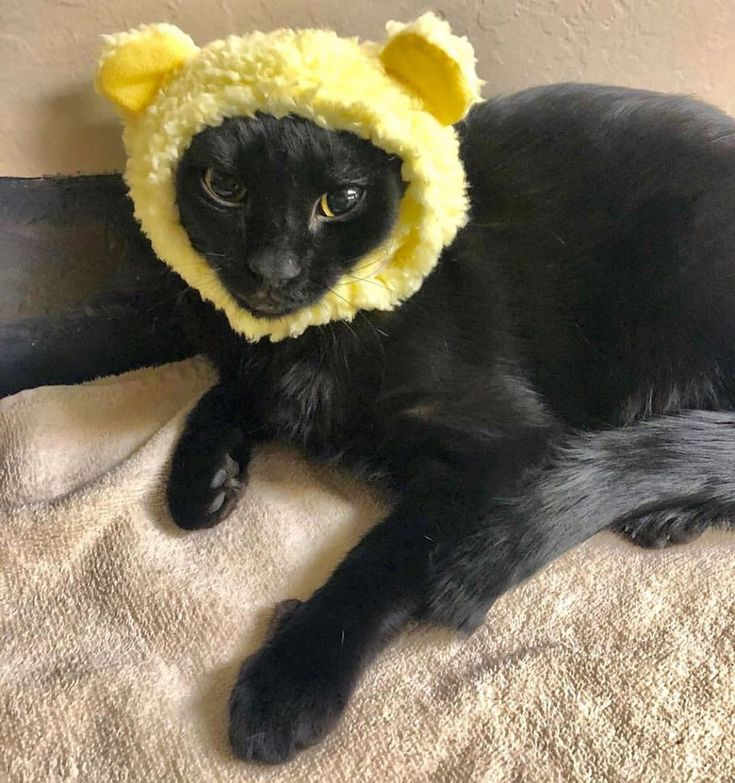 Black cats may be known as bad luck, but the truth is, we