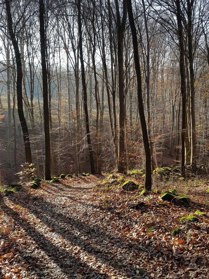 Erdő mélyén, Pilis