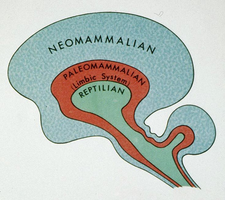 MacLean's triune brain theory illustration from a Rockefeller University web page.