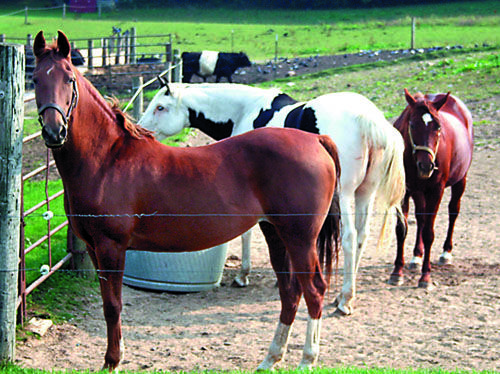 Horse Sales Contracts Making It Legal Equine Lease Sales And