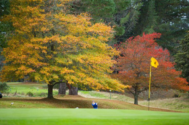 Beautiful autumn colours, Wairakei Golf + Sanctuary, May 2015. Photographer Martyn Davies.