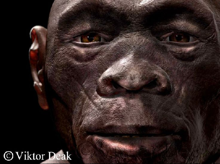 Homo habilis - reconstruction by Viktor Deak